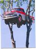 car_in_tree